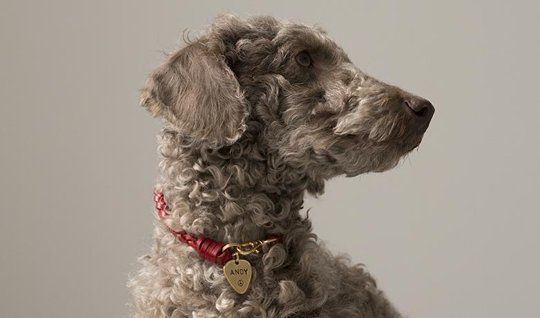 designer dog tags by wagtagdesign