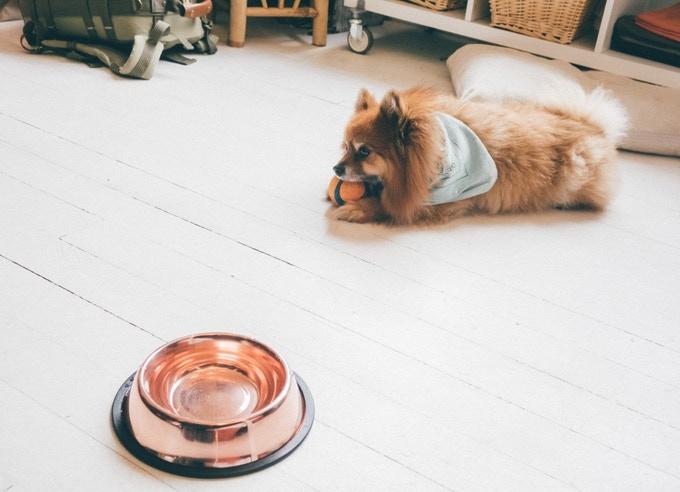 Copper Dog Bowl © CuBowl