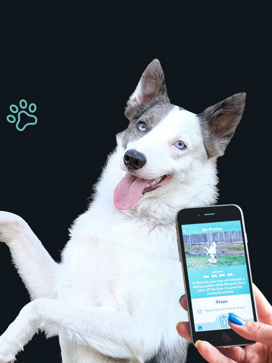 Puppr App - featuring The Super Collies