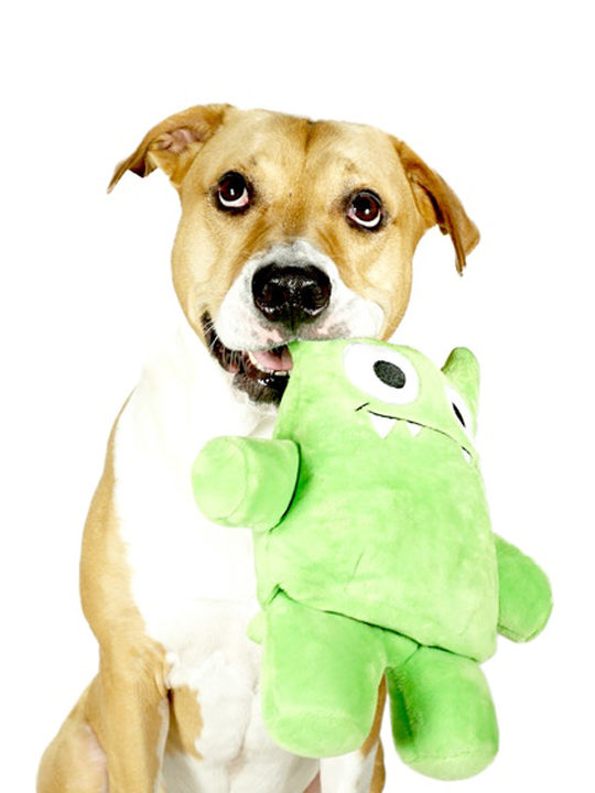 Dog with Tearrible Dog Toy