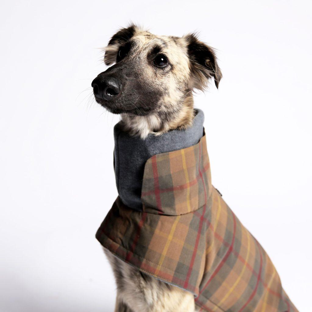 Cloud 7 Dog Coat Brooklyn Waxed Tartan