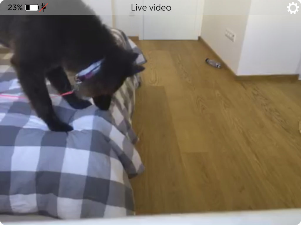 Our pup on our bed –Manything Dog Monitoring App Screenshot