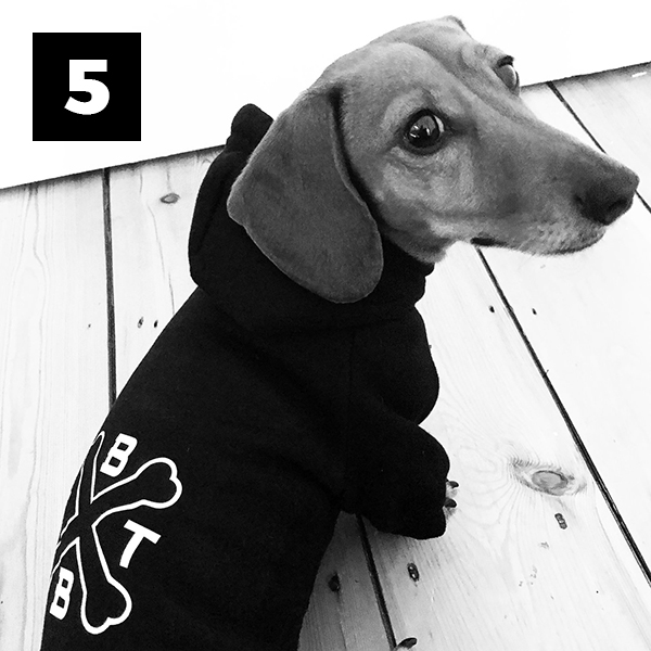 Bad to the Bone – Dog Hoodie